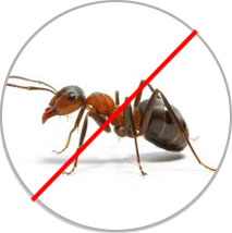 Pest Control Services in Thane East-West, Mumbai, India